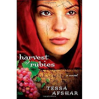 Harvest of Rubies PB
