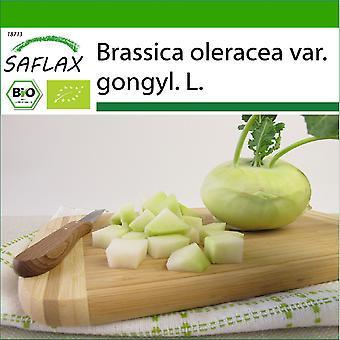 Saflax - 20 zaden - Met grond - Biologisch - Raap - Super Melt - BIO - Chou-rave - Superschmelz - BIO - Cavolo rapa - Superschmelz - Ecológico - Col silvestre - BIO - Kohlrabi - Superschmelz
