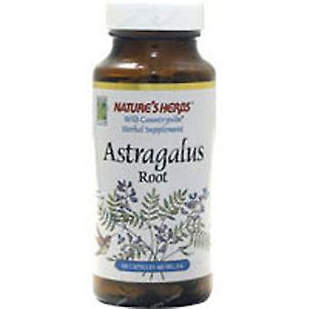 Nature's Life Astragalus Root, 100 Caps