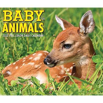Baby Animals 2022 Box Calendar Daily Desktop by Willow Creek Press