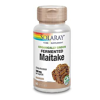 Solaray økologisk dyrket gæret Maitake champignon Vcaps 60 (93822)