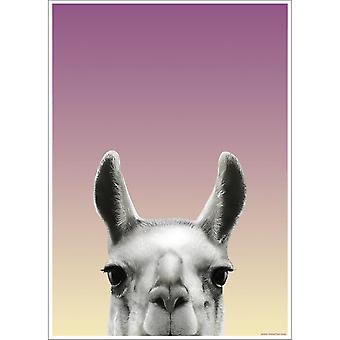 Inquisitive Creatures Llama Poster