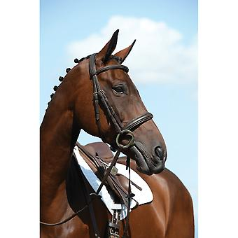 Collegiate Syntovia+ Padded Raised Cavesson Bridle - Brown
