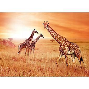 Wallpaper Mural African Giraffes