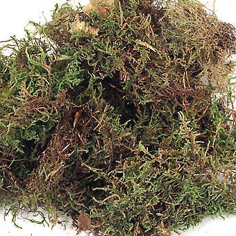 Dried Moss 100g Bag for Floristry Crafts | Floristry Crafts Flower Arranging