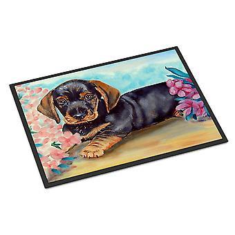 Caroline's Treasures Dachshund Indoor Outdoor Doormat, 18 x 27, Multicolor