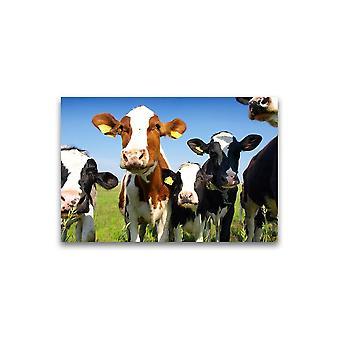 Kalveren op het veld Poster -Afbeelding door Shutterstock