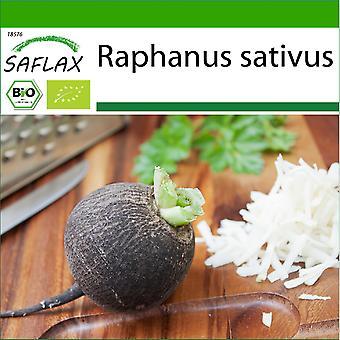 Saflax - 100 siementä - Maaperällä - Orgaaninen - Retiisi - Musta Espanjalainen kierros - BIO - Radis - Noir - BIO - Ravanello Spagnolo nero - Ecológico - Rábano - Español Negro - BIO - Schwarzer Spanischer Rettich