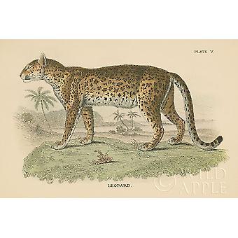 Vintage Leopard Poster trykk av vill Apple portefølje