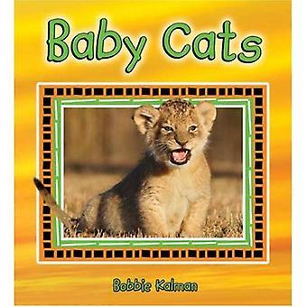 Baby Katzen (es macht Spaß, über Tierbabys zu lernen)