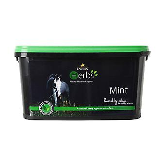 Lincoln Herbs Mint