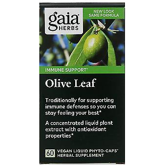 Gaia Herbs, Olive Leaf, 60 Vegan Liquid Phyto-Caps