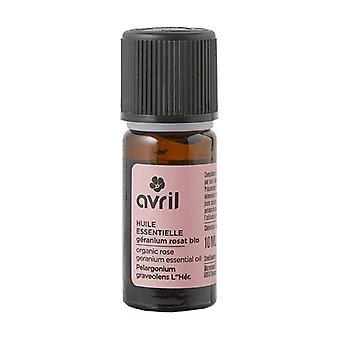 Organisk Rosat Geranium essensiell olje 10 ml essensiell olje