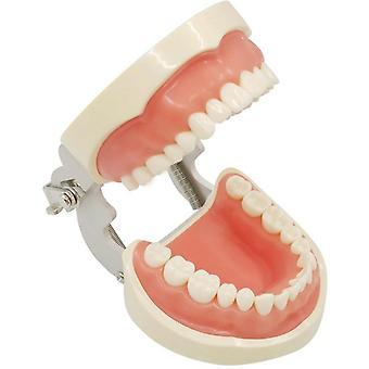 32 Odnímateľný model zubov Typodont Model pre ústnu výučbu zubov