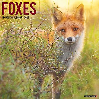 Foxes 2022 Wall Calendar by Willow Creek Press