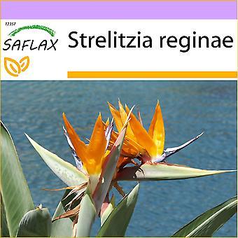 Saflax - 5 nasion - rajski ptak - L'Oiseau de paradis (reginae) - Uccello del paradiso - paraíso Ave del - Paradiesvogelblume (reginae)