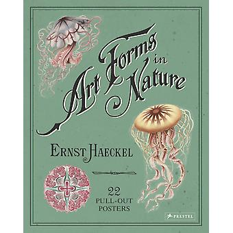 Ernst Haeckel Art Forms in Nature 22 PullOut Posters by Kira Uthoff