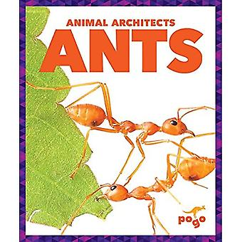 Ants (Animal Architects)