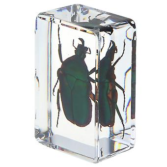Real Insect Specimen Scuola Educational Teaching Aids - Verde Scarabaeus