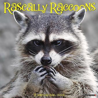 Rascally Raccoons 2022 Wall Calendar av Willow Creek Press