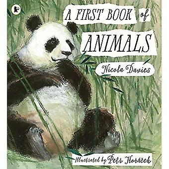 A First Book of Animals by Nicola Davies - 9781406378122 Book