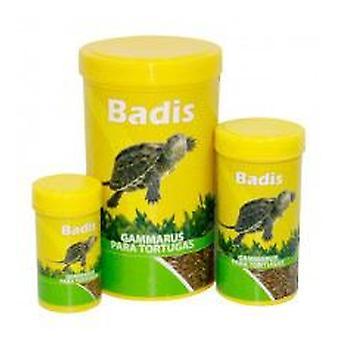 Badis Badis Gamarus (Reptiles , Reptile Food)