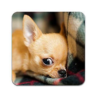 2 תחתיות כלבים צ ' יוואווה כלבים