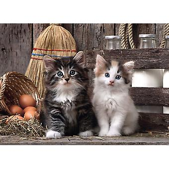 Clementoni Lovely Kittens High Quality Jigsaw Puzzle (1000 Pieces)