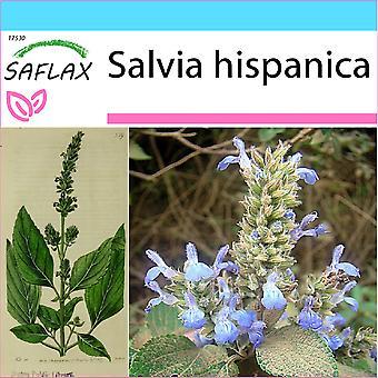 Saflax - Lahjasetti - 500 siementä - Meksikon Chia - Chia - Chia - Chía - Mexikanische Chia