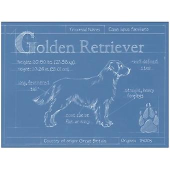 Blueprint Golden Retriever Poster Print by Ethan Harper (16 x 12)