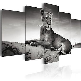 Vászon nyomtatás-Lioness a sivatagban
