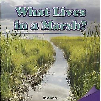 Ce qui vit dans un marais?