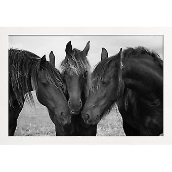 JUNIQE Print - Sorte og hvide heste - Hesteplakat i gråt &sort