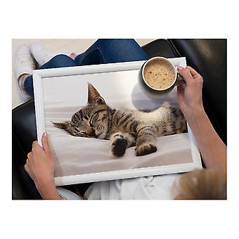 Lap Cushion Sleeping Kitten