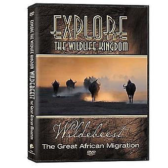 GNU-stor afrikansk [DVD] USA importere
