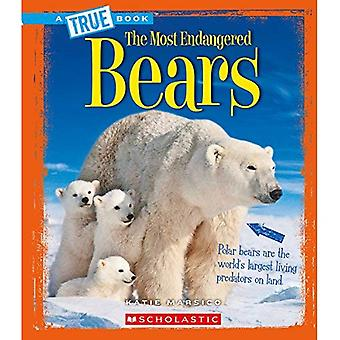 Bears (True Book the Most Endangered)