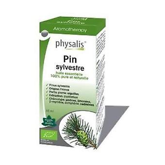 Wild Pine Essence Bio 10 ml