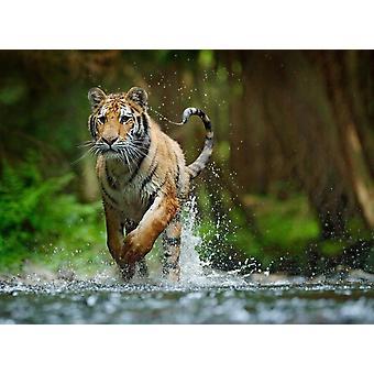 Wallpaper Mural Siberian Amur Tiger