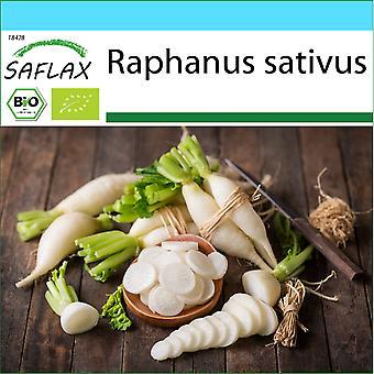 Saflax - Gift Set - 100 seeds - Organic - Radish - Long White Icicle - BIO - Radis - Glaçon - BIO - Ravanello - Candela di ghiaccio - Ecológico - Rábano - Carámbano - BIO - Radieschen - Eiszapfen