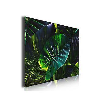 Stołowe liście tropikalne w amazońskim lesie deszczowym, 80x50cm