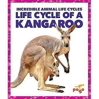 Life Cycle of a Kangaroo (Incredible Animal Life Cycles)