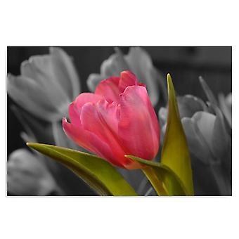 Deco Panel, Red tulip