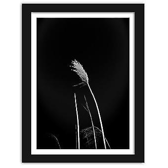 Retrato no frame preto, grama em um fundo preto