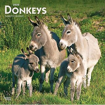 Donkeys 2020 Square Wall Calendar by Browntrout Publishers Inc