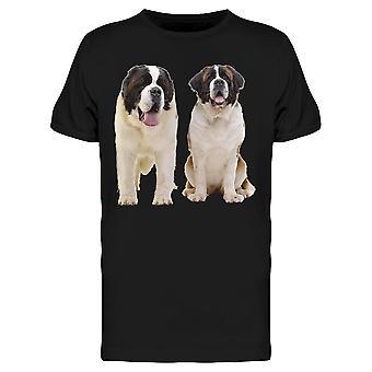 اثنين من كبار سانت برنارد الكلاب تي الرجال & ق -الصورة من قبل Shutterstock