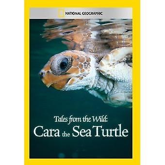 Tales från naturen: Cara havssköldpadda [DVD] USA import