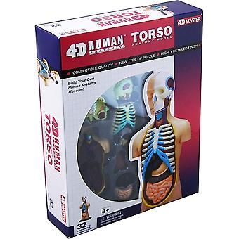4D visie menselijke anatomie torso model