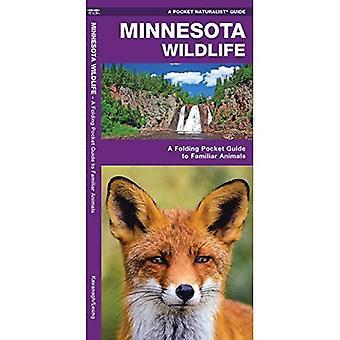 Minnesota Wildlife: A Folding Pocket Guide to Familiar Species (Pocket Naturalist Guide Series)