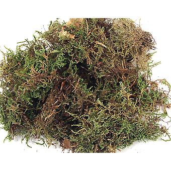 Dried Moss 100g Bag for Floristry Crafts