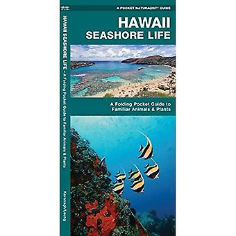 Hawaii Seashore Life: An Introduction to Familiar Species (Pocket Naturalist Guide Series)